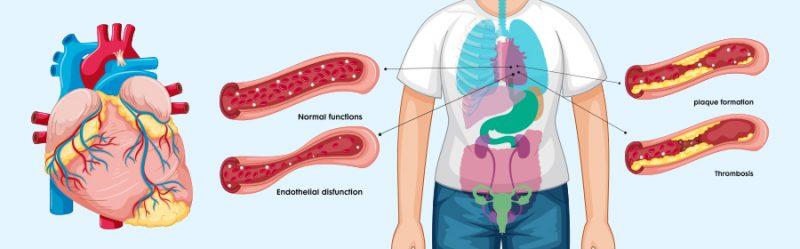 organs illustration