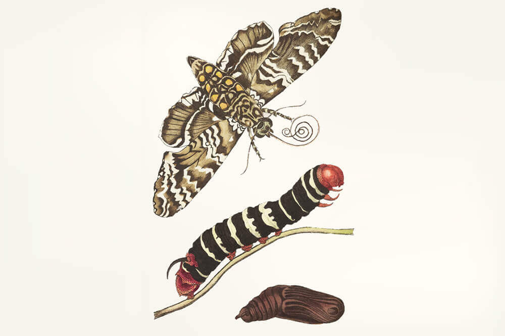 scientific illustration design